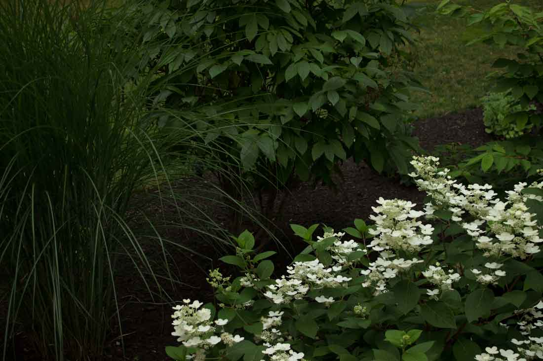 Flowering shade-loving plants