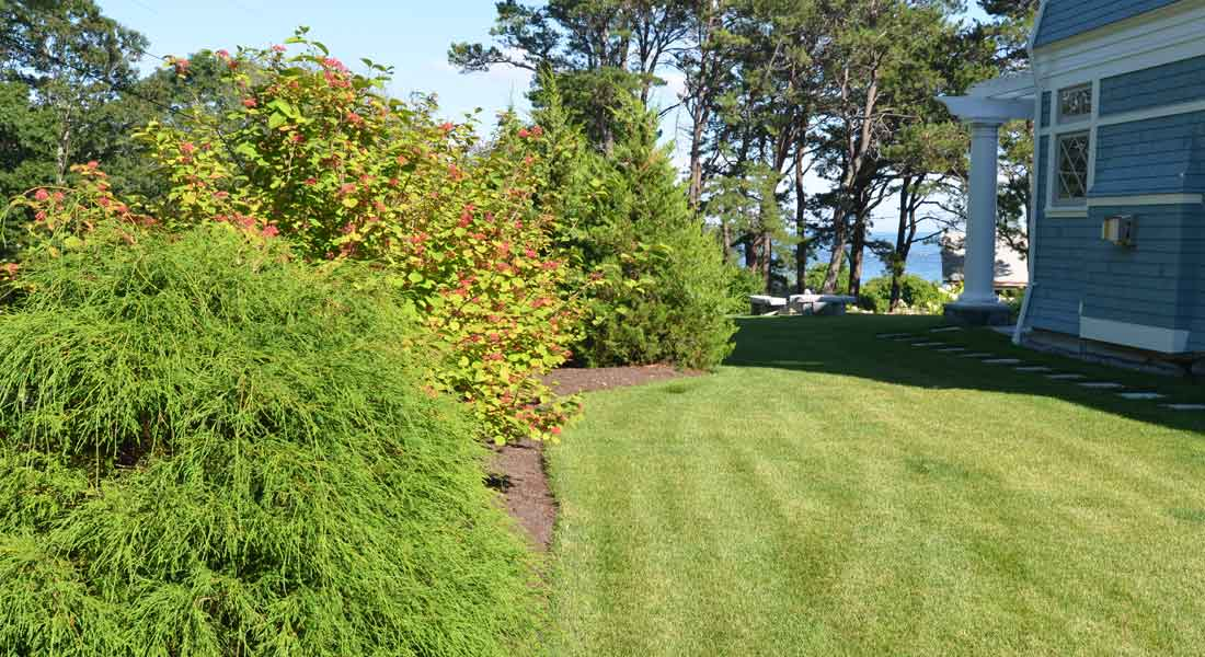 Lush lawn and evergreen borders