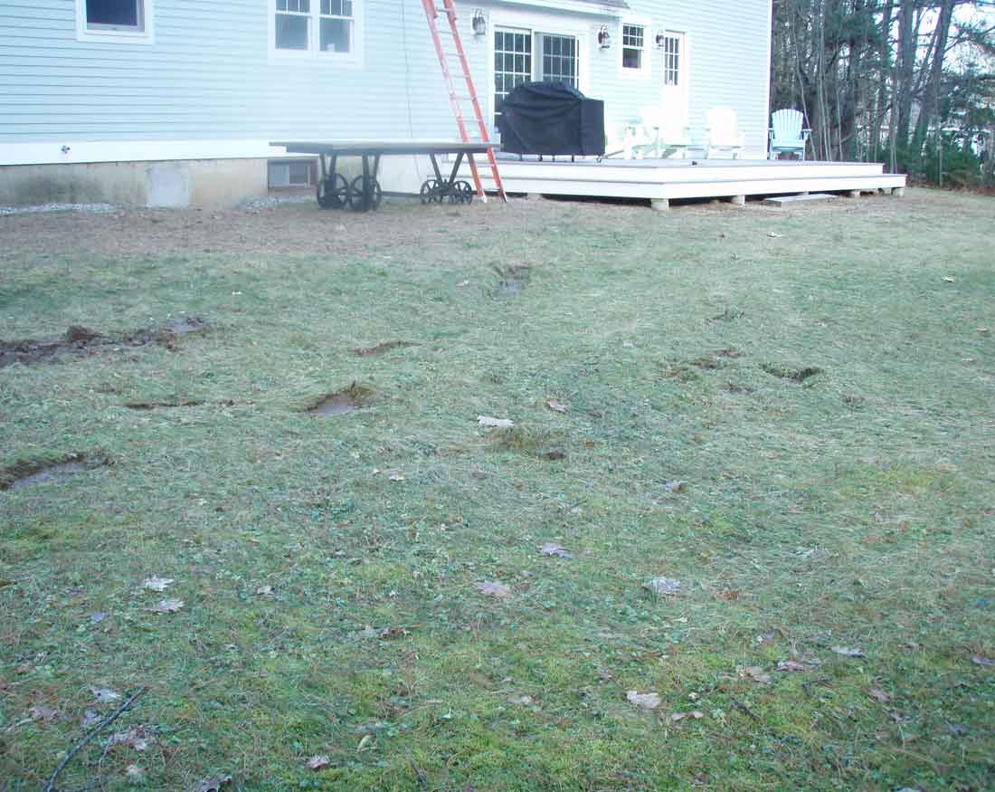 BEFORE - the rear of the yard is in poor condition