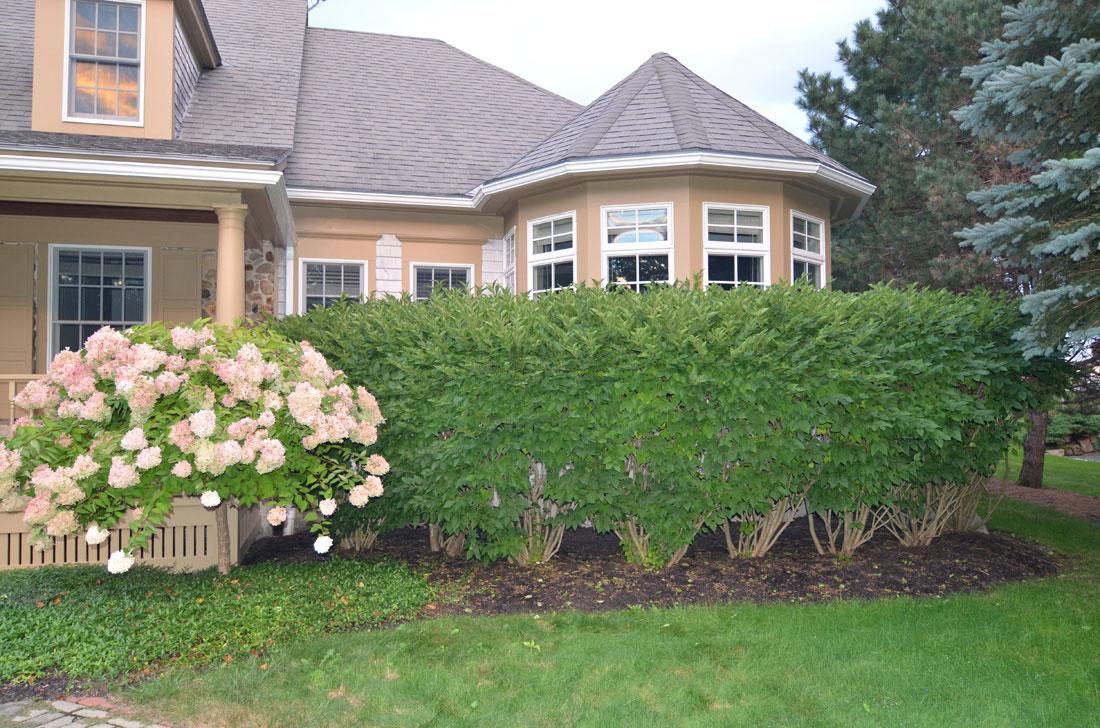 High shrubs cover the windows