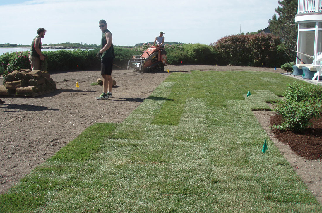 Laying sod for lawn
