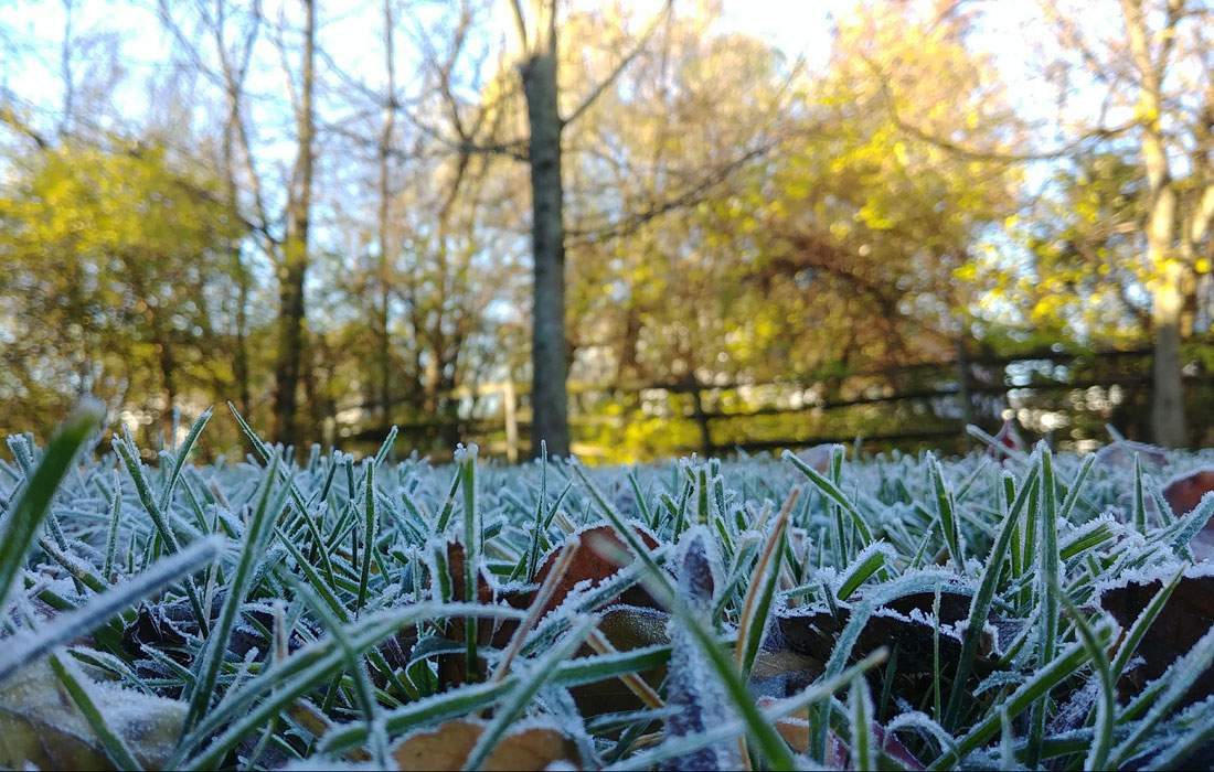 Prepare your landscape for winter
