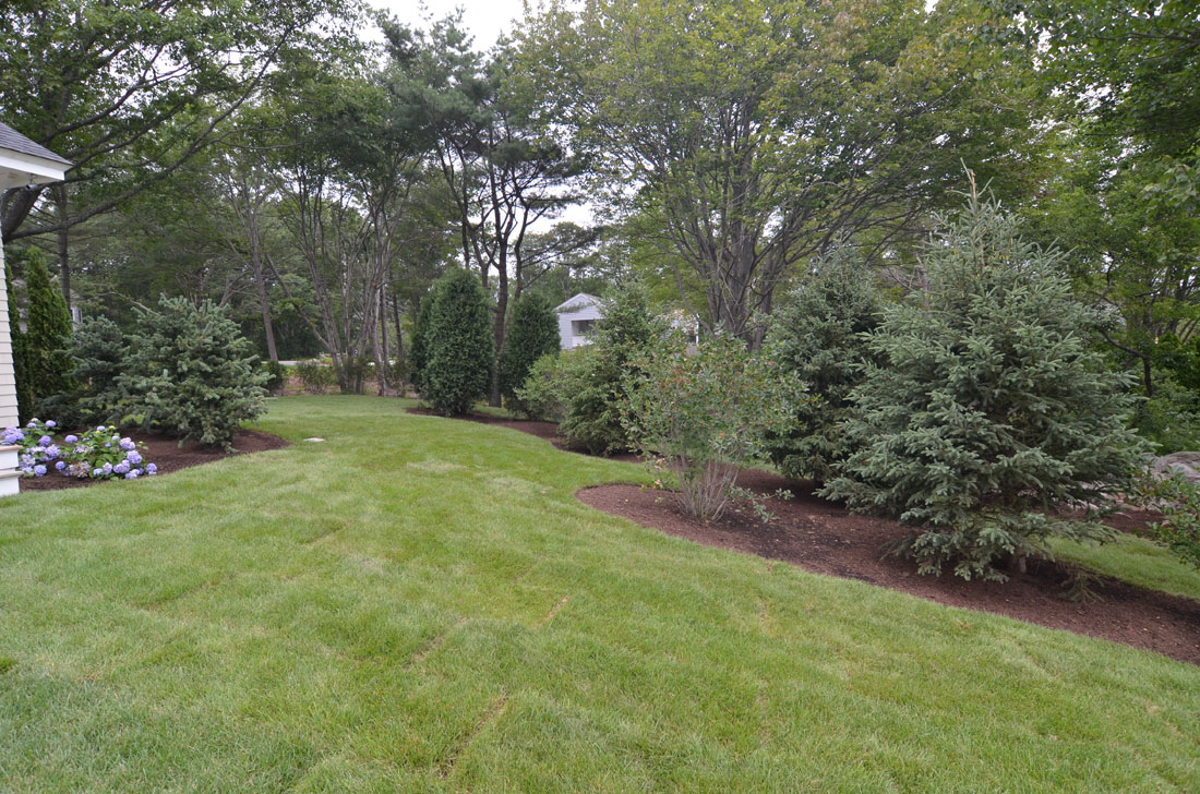 More privacy and a natural woodland landscape