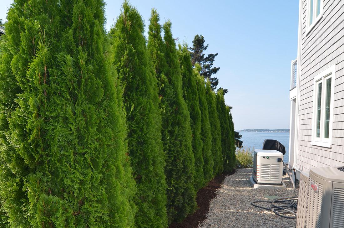Visual barrier plantings