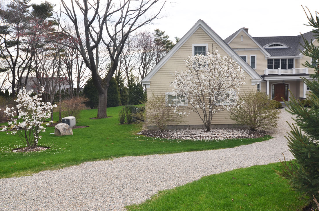 Privacy trees are planted along property line