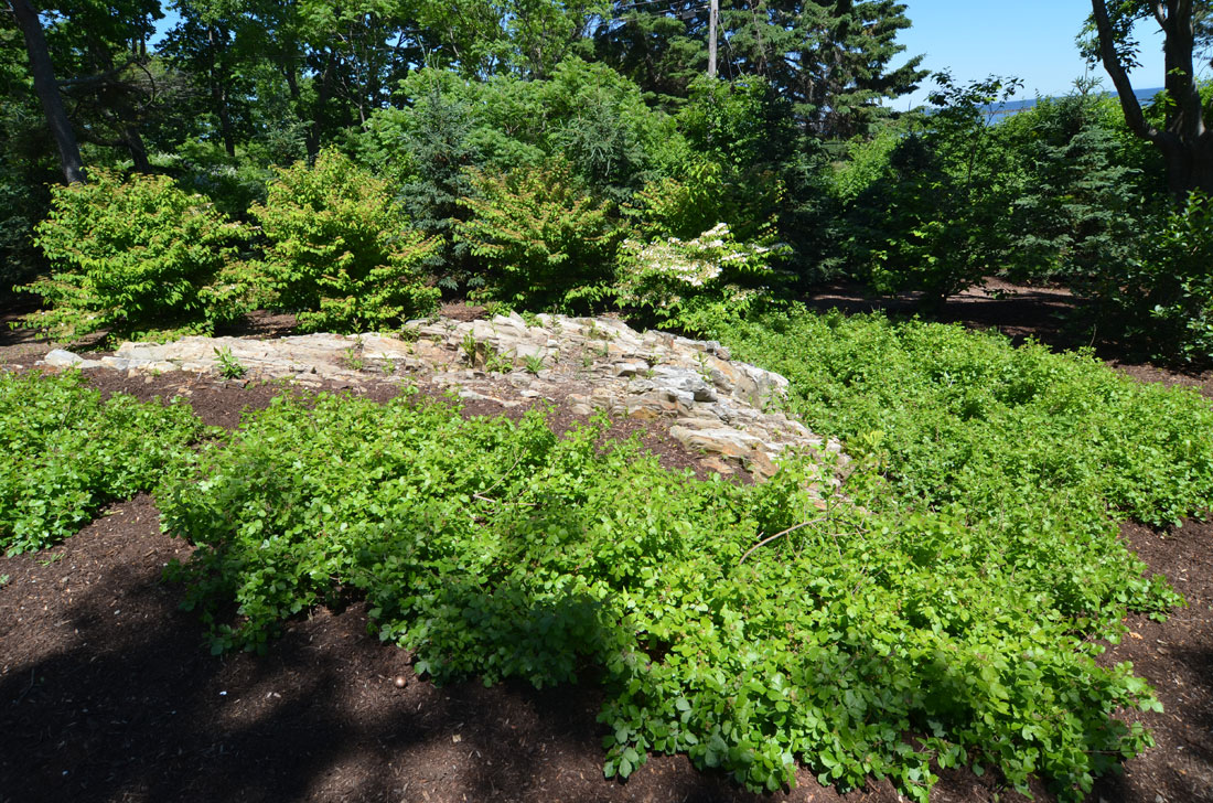 New landscape with exposed ledge